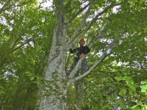 grimpe d'arbres avec Montagnes et Garrigues